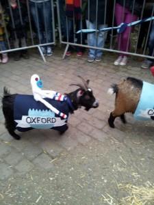 Goat Race